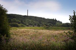 Ferryhill Carrs Nature Reserve