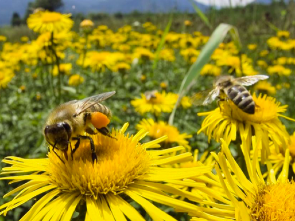 the importance bees