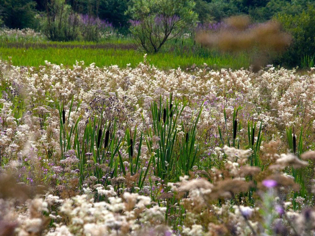 *NOW CLOSED* Invitation to Tender - Great North Fen